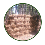 3. Longleaf Pine Needles